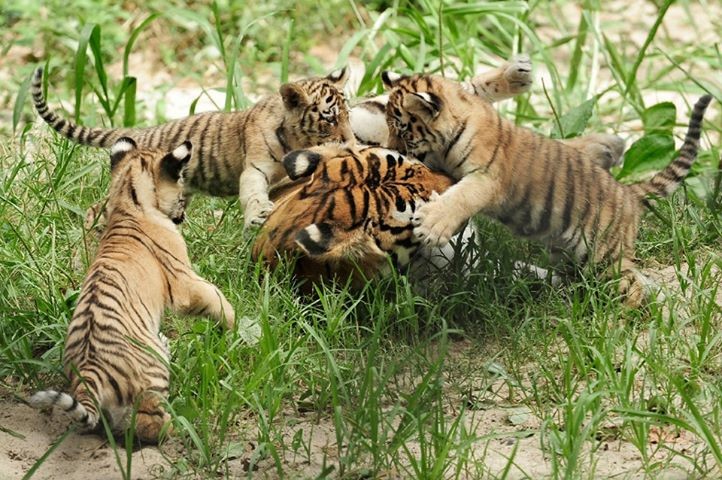 tadoba-national-park-booking